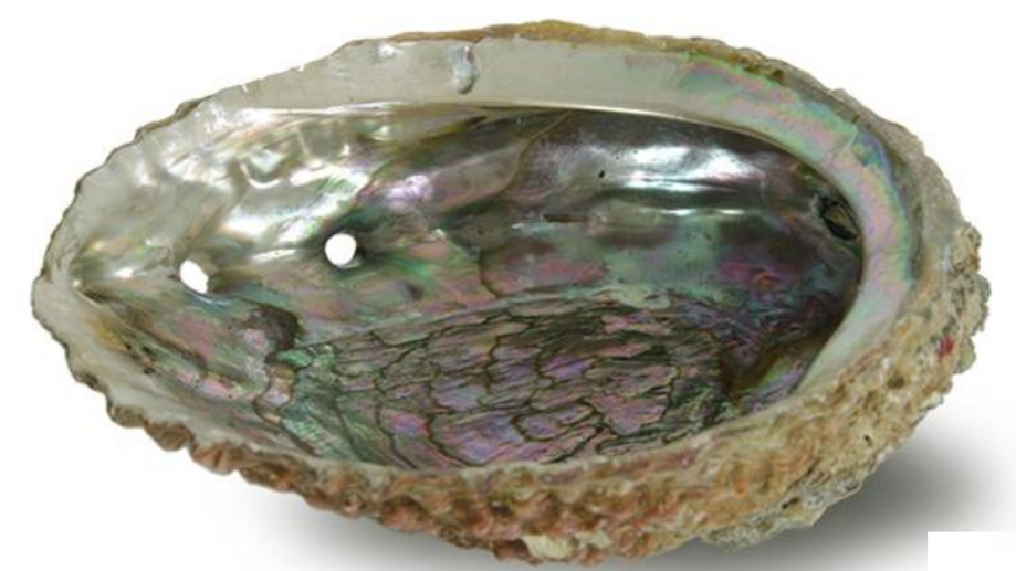 Abalone Smudging Shell