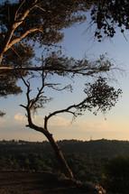 Carmel Mountain, Haifa