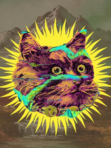 """""""Wildcat"""" 2020"""
