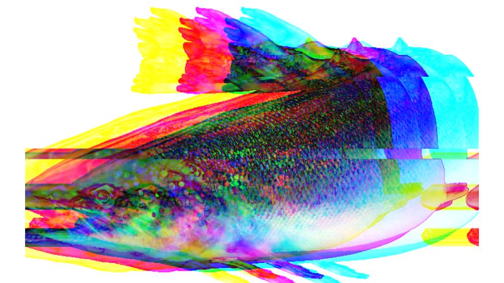 Salmon colour.png