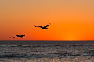 sunsetwbirds.jpg