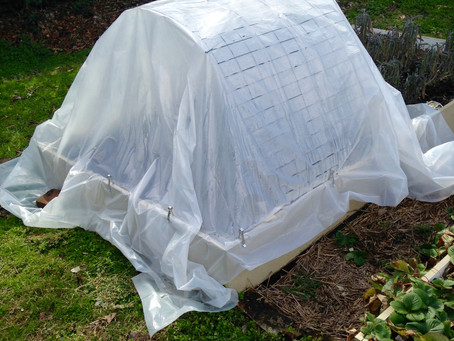 A Gardener's Conundrum and Bad Seeds