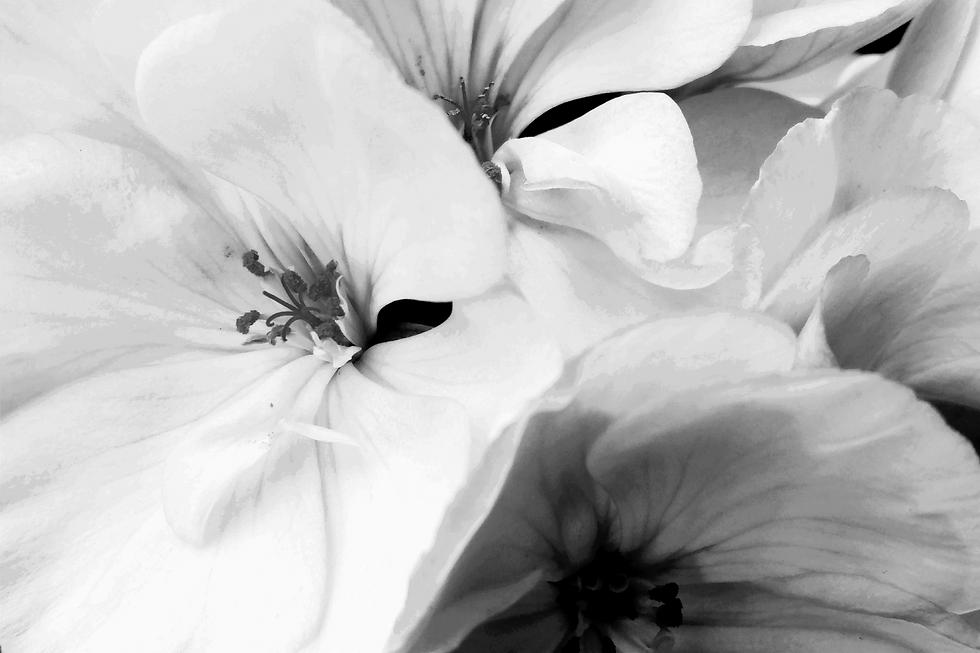 Flower_edited_edited_edited.png