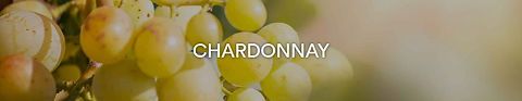 Rebsorte Chardonnay.JPG