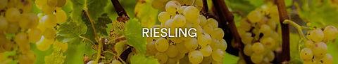 Rebsorte Riesling.JPG
