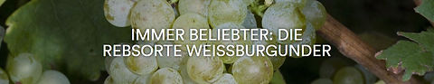 Rebsorte Weissburgunder.JPG