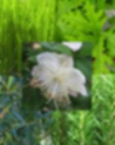 PnS herb pic.jpg