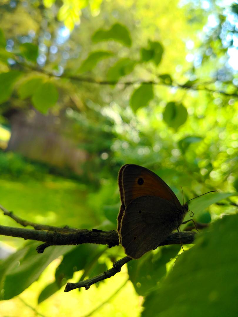 Schmetterling.jpg