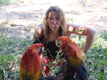Papageien im Comunidad