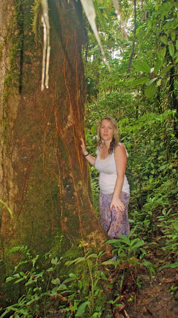 Copal Baum