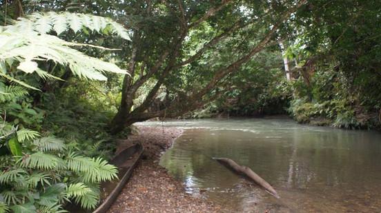 Fluss im Comunidad Morete Cocha im Amazonas von Ecuador
