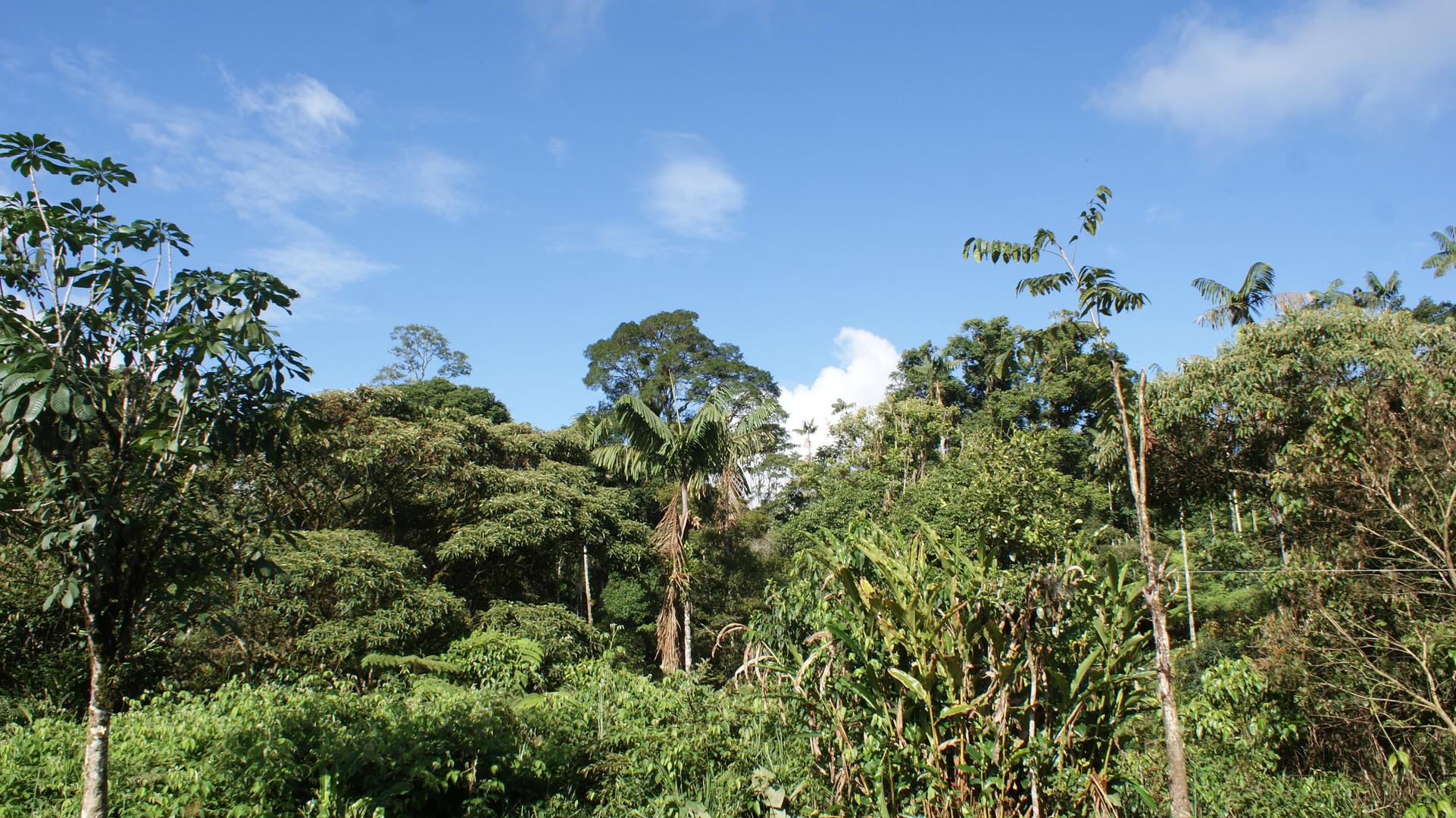 Shuar Amazonas Ecuador
