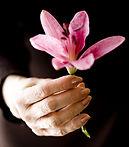 Lilly en la mano