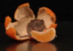 Orange Mouse Theatricals