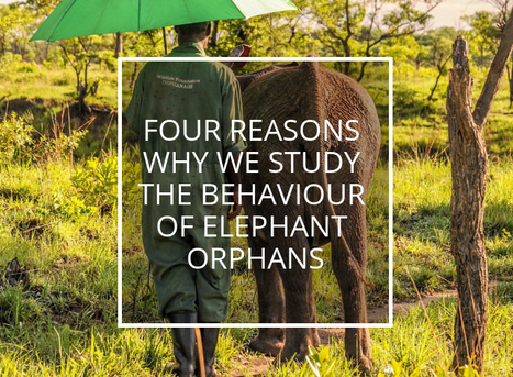 Four reasons why we study the behaviour of elephant orphans