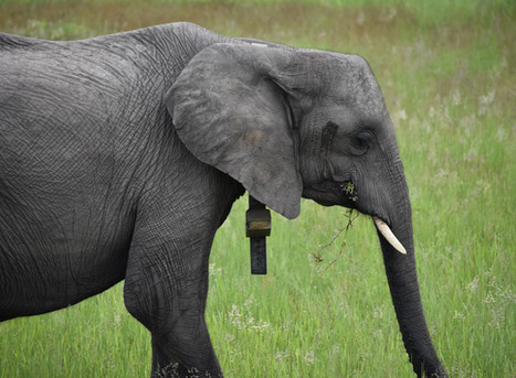 How do we identify individual elephants?