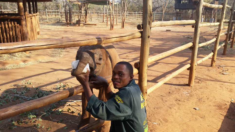 Through their tender loving care and with 3 hourly milk feeds Mkaliva slowly started forming bonds with her Keepers, who adopted the role of mother, providing her with the nurture she required to overcome her traumatic start to life.