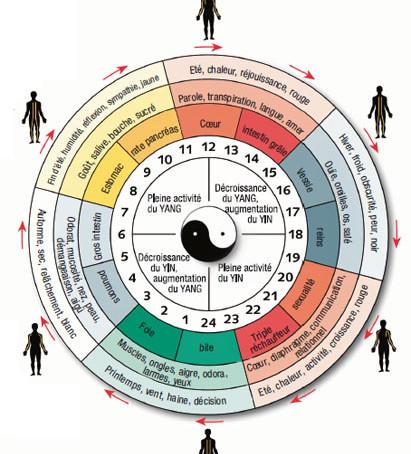 L'HORLOGE CIRCADIENNE                        et la médecine chinoise