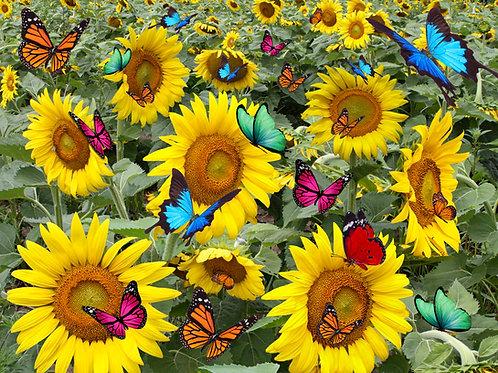 Jubilee Sunflowers 500 Piece