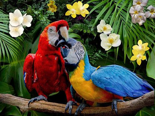 Parrots 500 Piece