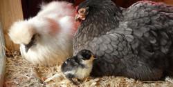 dutch & ophelia-team mothers