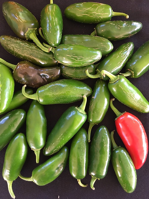 Hot Pepper - Jalepeno