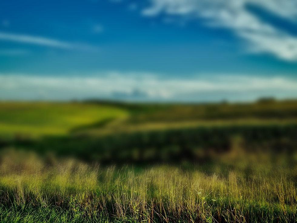 field_blur_edited.jpg