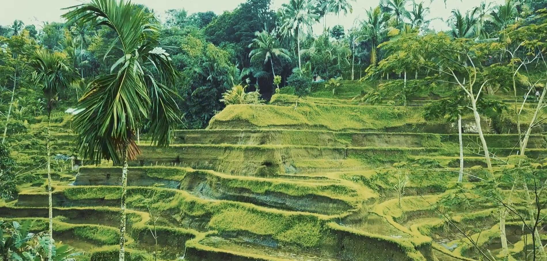 Video-l-epoustouflante-beaute-de-Bali