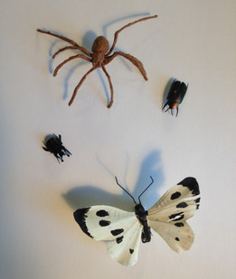 Changing people's perception of Arthropods