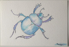 Water Colour Beetle