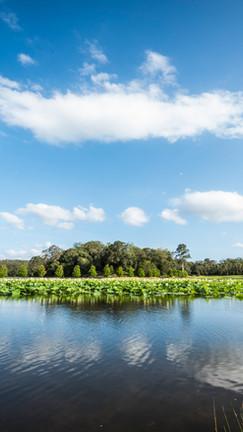 Lotus lake.jpg