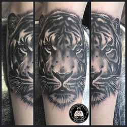 Black & Grey, tiger, realistic, ink