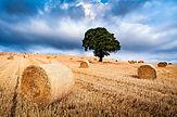 SAEL_Biomass