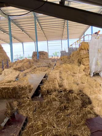 Biomass_Firozpur14.jpg