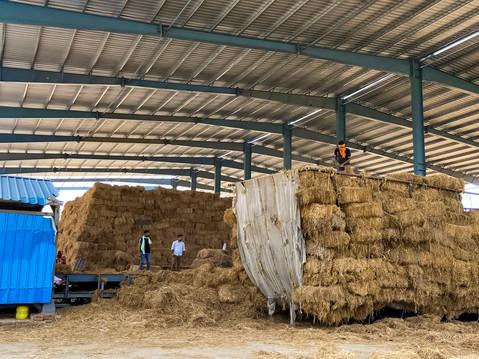 Biomass_Firozpur15.jpg