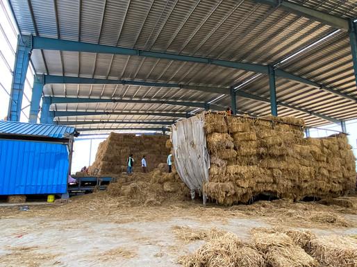 Biomass_Firozpur13.jpg
