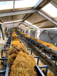 Biomass_Firozpur12.jpg