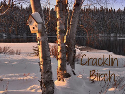 Cracklin Birch