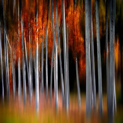 Blazing Forest Art