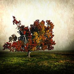 Beautiful Tree Buckland Valley