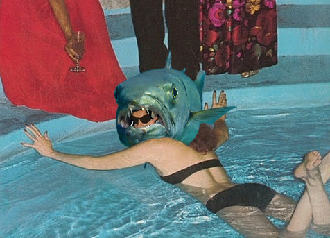sharp_shark.jpg