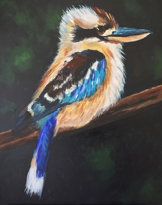 Laugh Kookaburra