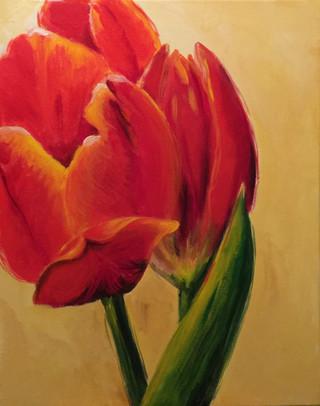 Tulip Tangerine