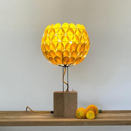 Olea citron