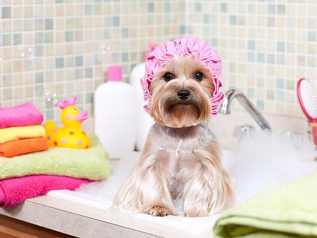 Os principais cuidados na hora de escolher um pet de banho & tosa