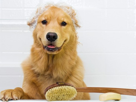 4 dicas para manter seu cão sempre limpinho e saudável