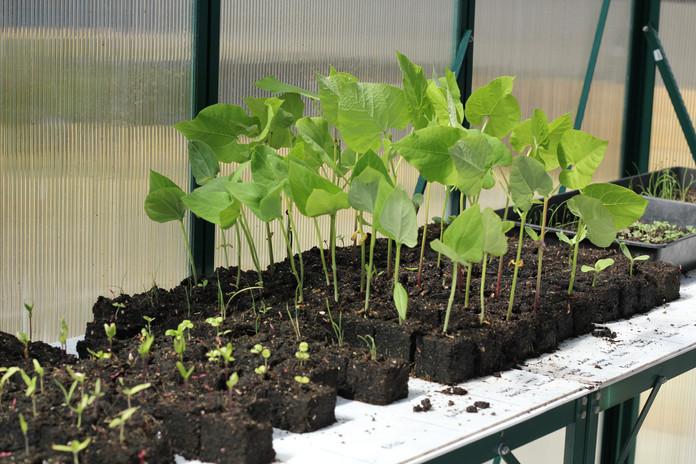 Seedling growing strong