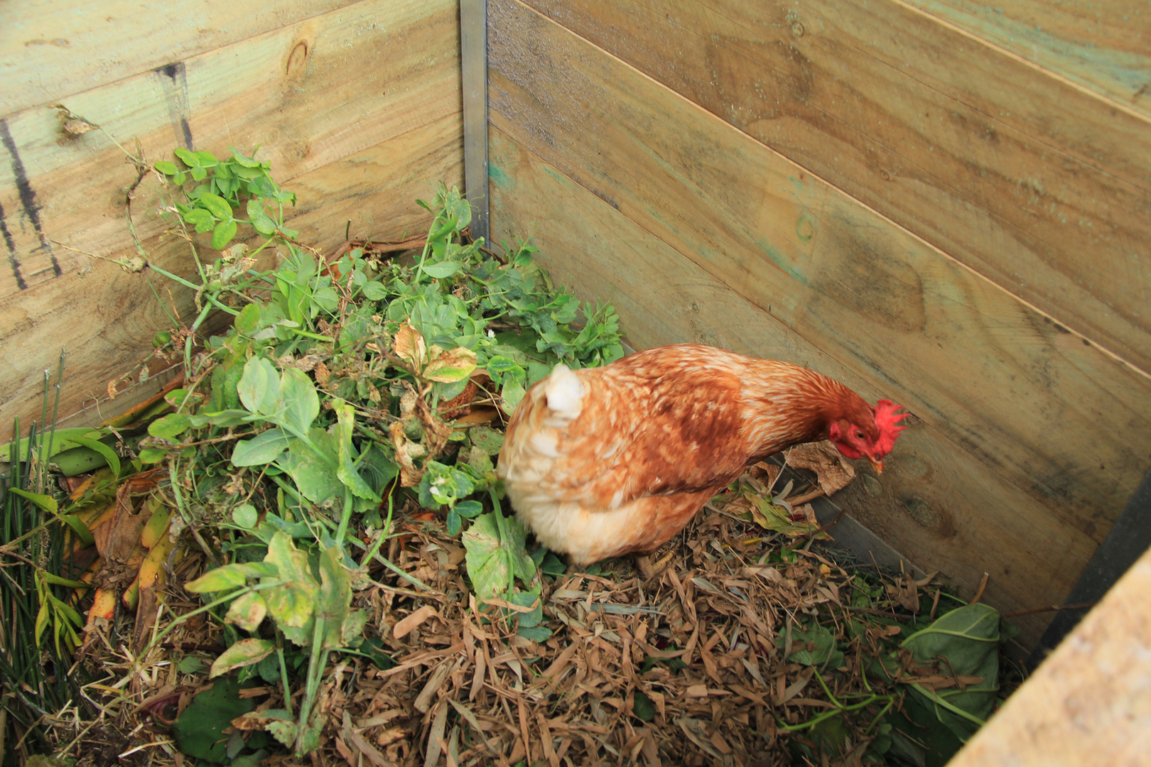 Compost's little helper