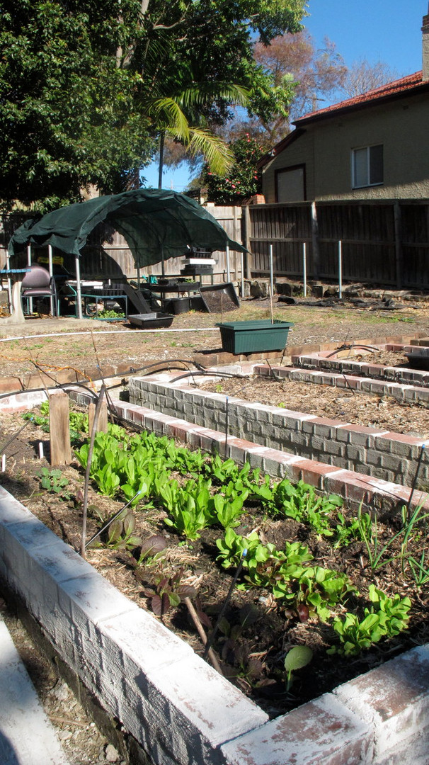 The start of the chook shed