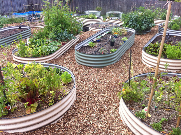 the veg keeps growing